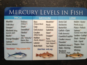 Heavy metal toxicity in fish and seafood for Fish with low mercury