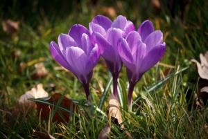 Springtime: Overcoming Herpes