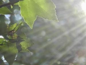 Non toxic sun protection